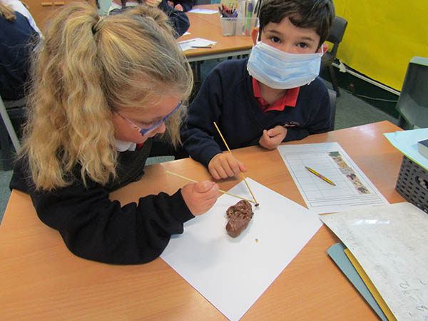 Year 3 dissect Stone Age coprolite